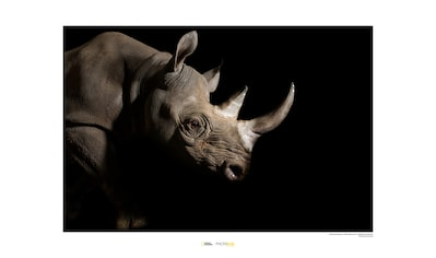 KOMAR Wanddekoration »Black Rhinoceros« kaufen
