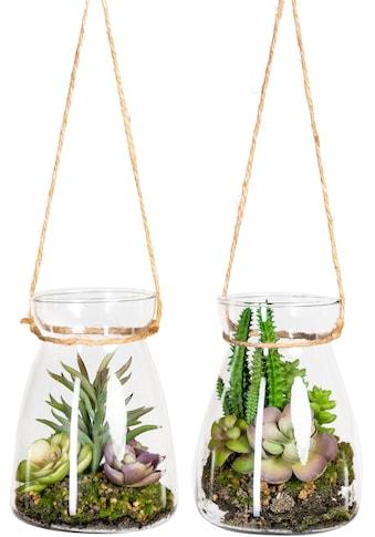 DELAVITA Künstliche Zimmerpflanze »Oswin«, im Glasgefäß, 2er Set kaufen