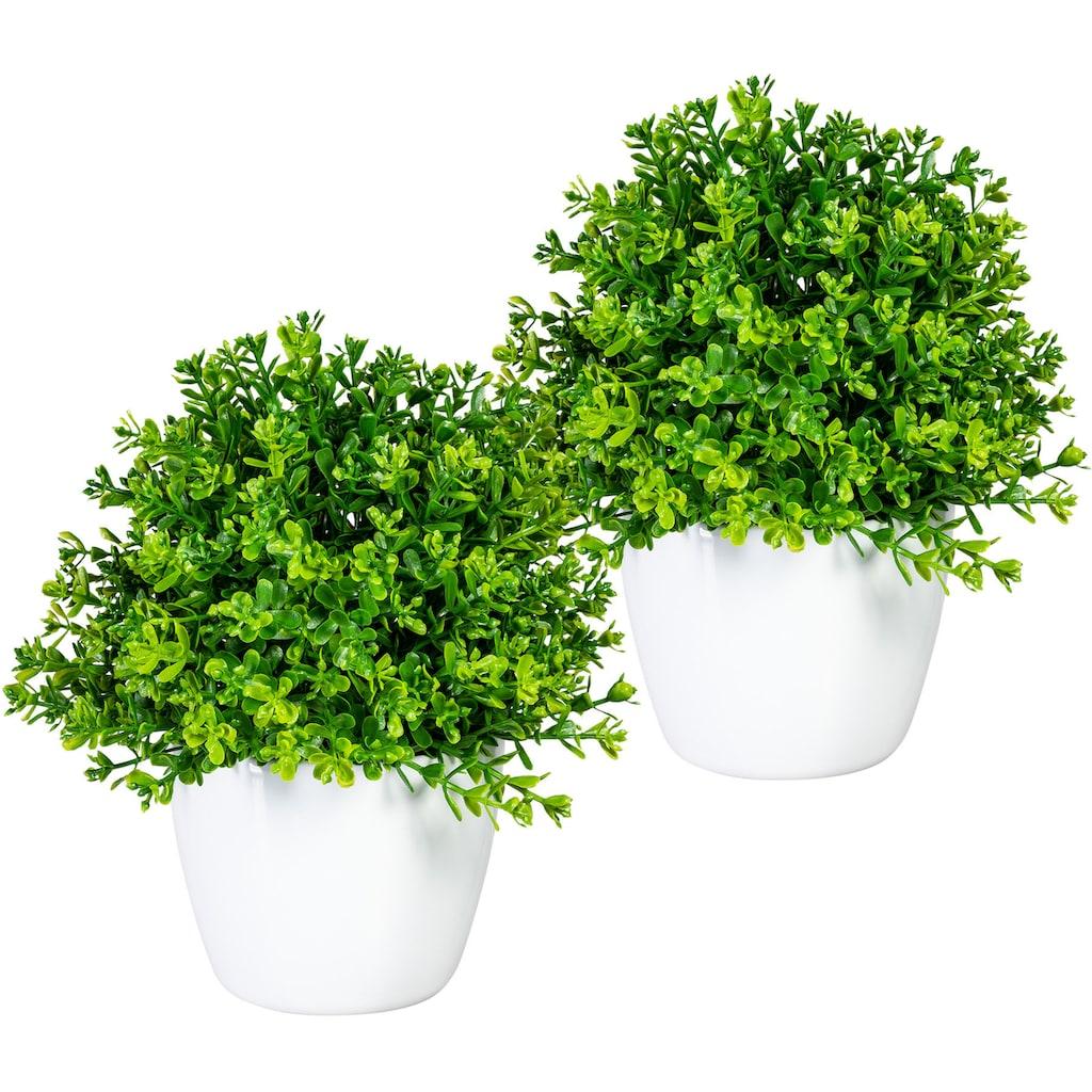 Home affaire Künstliche Zimmerpflanze »Moulins«, 2er Set