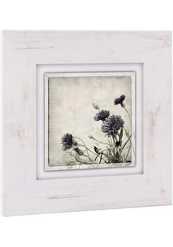 Home affaire Holzbild »Kornblumen«, 40/40 cm kaufen