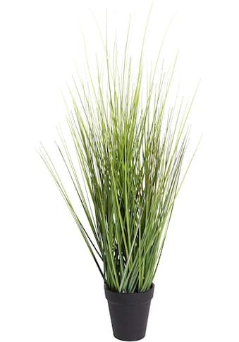 Botanic-Haus Kunstgras »Gras Festuca« kaufen
