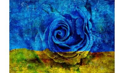 CONSALNET Vliestapete »Blau - Gelbe Rose«, in verschiedenen Größen kaufen
