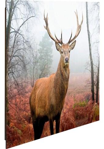 Home affaire Deco-Panel »Hirsch im Wald« kaufen