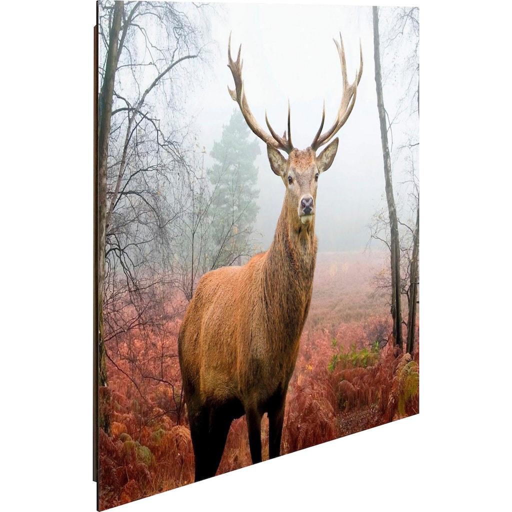 Home affaire Deco-Panel »Hirsch im Wald«