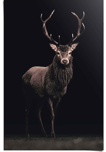 Reinders! Poster »Poster Hirsch«, Hirsche, (1 St.) kaufen