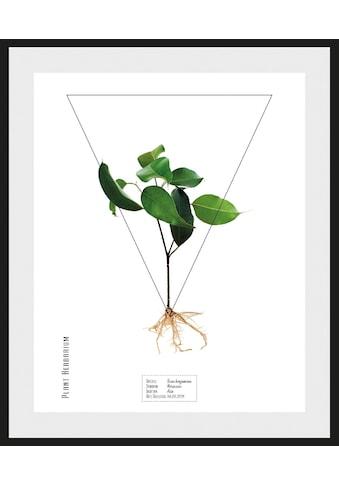 andas Bild »Pflanze«, mit Rahmen kaufen