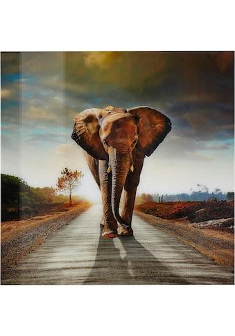 Home affaire Acrylglasbild »Elefant«, 100/100 cm kaufen