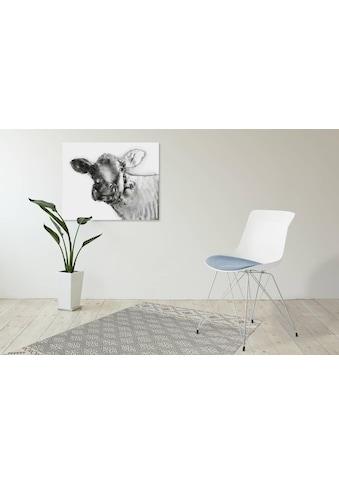 Kayoom Schalenstuhl »Emily«, (2 Stück), mit farblich abgesetztem Sitzkissen kaufen