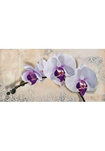 Home affaire Kunstdruck »ELENA DOLCI / Royal Orchid«, (1 St.) kaufen