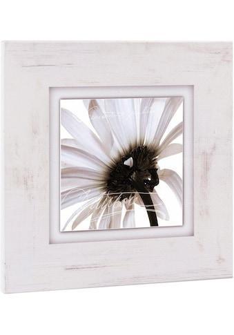 Home affaire Bild »Zartrosa Blüte«, Blume kaufen