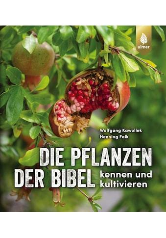 Buch »Die Pflanzen der Bibel / Wolfgang Kawollek, Henning Falk« kaufen