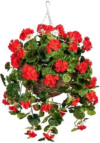 DELAVITA Künstliche Zimmerpflanze »Volme«, im Weidekorb kaufen