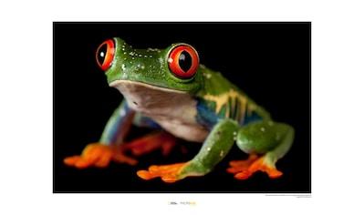 KOMAR Wanddekoration »Red - eyed Treefrog« kaufen