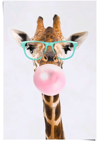Reinders! Poster »Poster Funky Giraffe«, Giraffen, (1 St.) kaufen