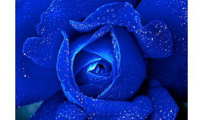 CONSALNET Vliestapete »Blaue Rose«, in verschiedenen Größen kaufen
