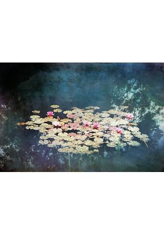 DELAVITA Kunstdruck »WÜSTENHAGEN / Wasserlilien«, (auf Leinwand 80/3,5/60 cm) kaufen