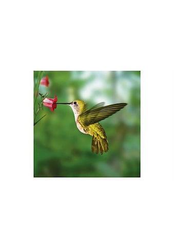 Home affaire Glasbild »Humming bird«, 30/30 cm kaufen