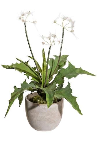 Creativ green Kunstpflanze »Pusteblumenbusch«, im Zementtopf kaufen