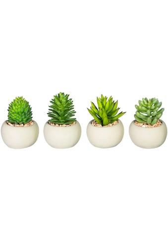 Leonique Künstliche Zimmerpflanze »Maddison«, 4er Set kaufen