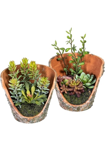 DELAVITA Künstliche Zimmerpflanze »Henrike«, in Tontopfoptik, 2er Set kaufen