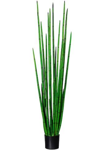 Creativ green Künstliche Zimmerpflanze »Sanseveria cylindrica« kaufen
