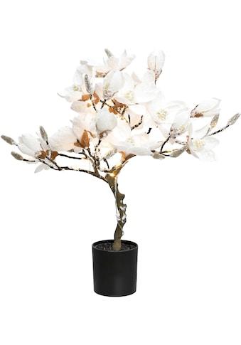 LED Baum »Magnolie«, Warmweiß, beschneit, Höhe ca. 58 cm, mit 20 LEDs kaufen