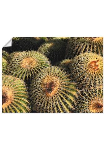 Artland Wandbild »Arizona golden barrels«, Pflanzen, (1 St.), in vielen Größen &... kaufen