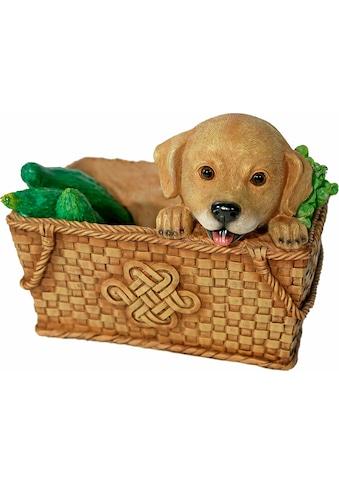 Home affaire Tierfigur »Hund im Korb, Breite ca. 26cm« kaufen