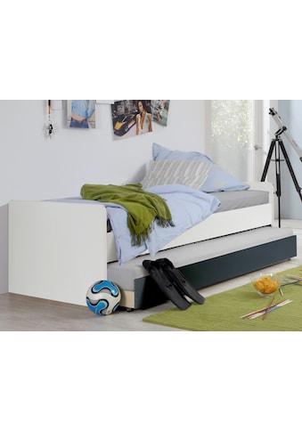 Wimex Einzelbett »Rocco« kaufen