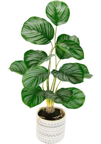 andas Kunstpflanze »Lennja«, im Keramiktopf kaufen