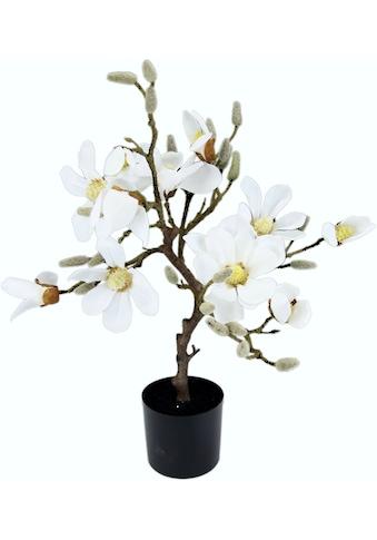 I.GE.A. Kunstbaum »Magnolienbaum« (1 Stück) kaufen