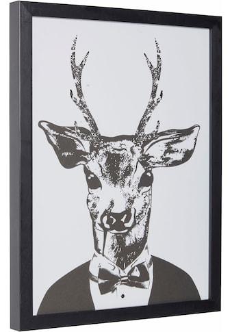 G&C Kunstdruck »Reh im eleganten Anzug«, 33/43 cm, gerahmt kaufen