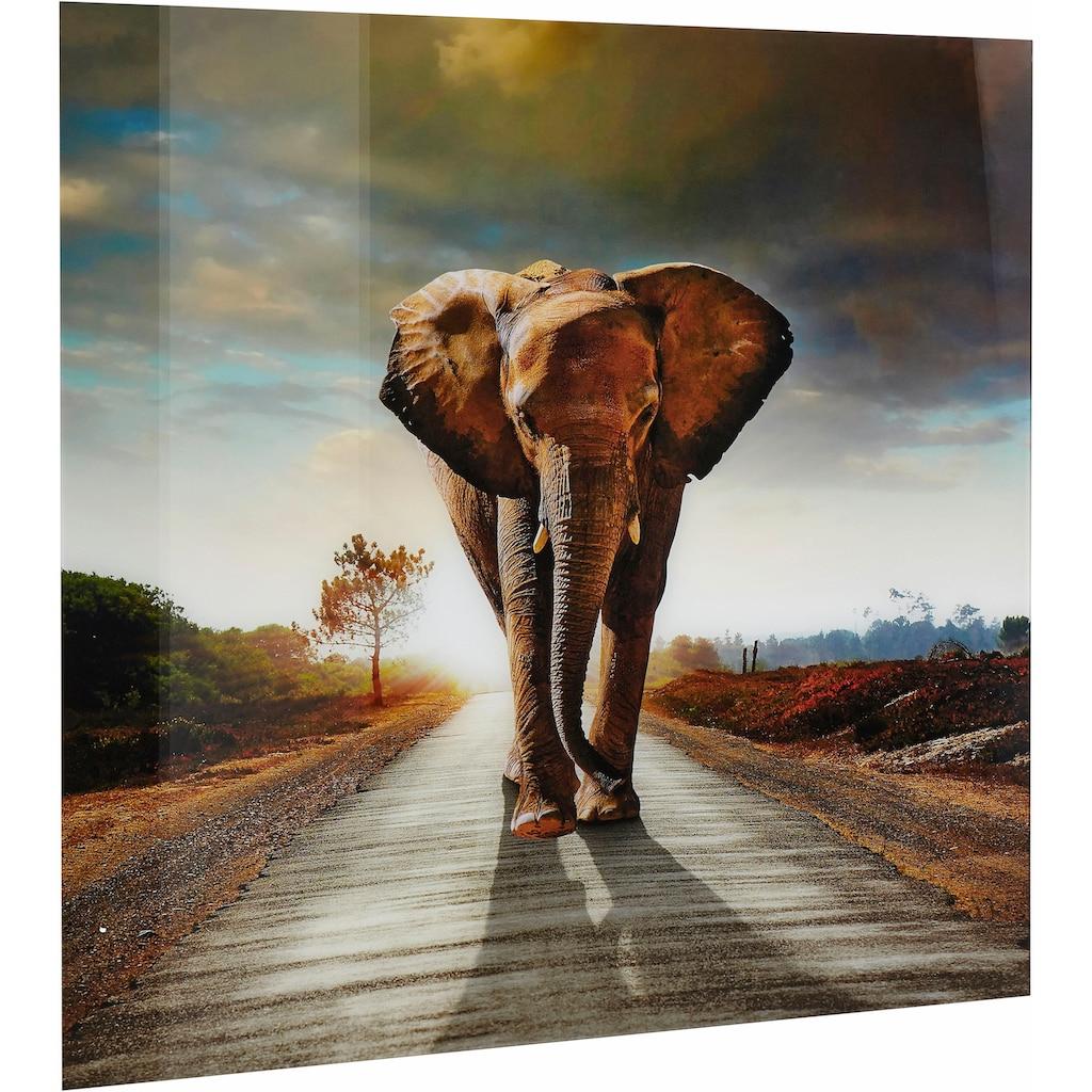 Home affaire Acrylglasbild »Elefant«, 100/100 cm