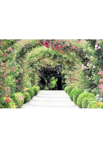 Home affaire Fototapete »Rose Arch Garden« kaufen