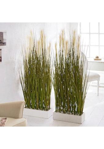Schneider Kunstpflanze »Raumtrenner-Gras«« kaufen