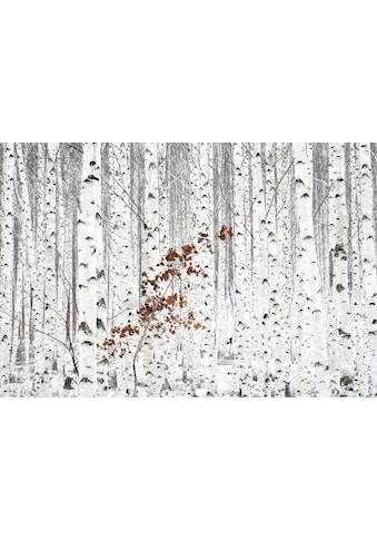Wall-Art Vliestapete »Han - Birkenwald« kaufen