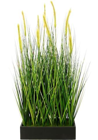 I.GE.A. Kunstpflanze »Fuchsschwanzgras im Topf« kaufen