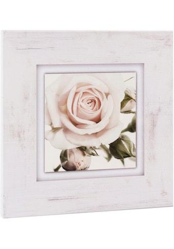 Home affaire Holzbild »Hellrosa Rosenblüte«, 40/40 cm kaufen