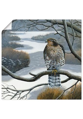 Artland Wandbild »Falke im Baum«, Vögel, (1 St.), in vielen Größen & Produktarten... kaufen