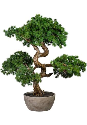 Creativ green Kunstbonsai »Bonsai Lärche«, in Schale aus Naturmaterial kaufen