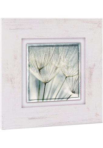 Home affaire Holzbild »Pusteblume nah«, 40/40 cm kaufen