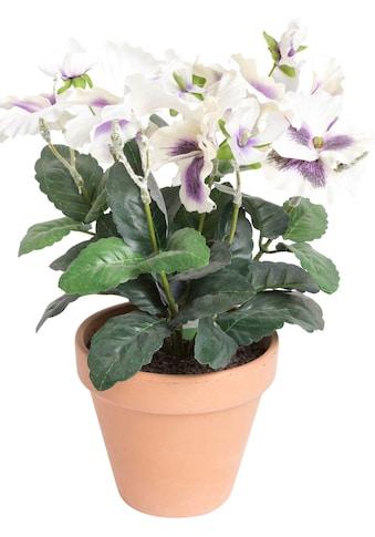 Botanic-Haus Kunstblume »Stiefmütterchen« kaufen