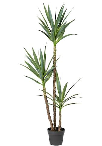 Home affaire Künstliche Zimmerpflanze »Amagney« kaufen