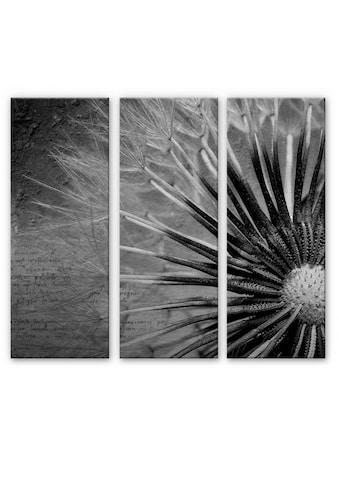 Wall-Art Mehrteilige Bilder »Bild Pusteblumen Poesie«, (Set, 3 St.) kaufen