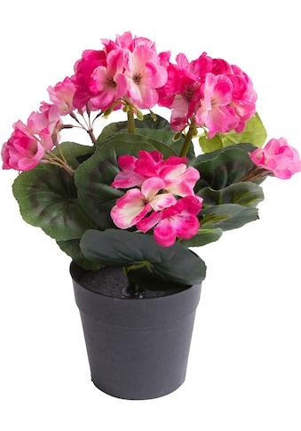 Botanic-Haus Kunstblume »Geranie mit 6 Stielen« kaufen