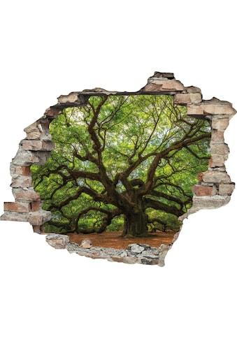 queence Wandtattoo »Baum« kaufen