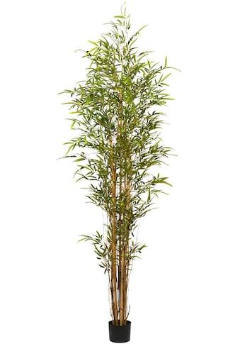 Creativ green Kunstbaum »Bambus« (1 Stück) kaufen