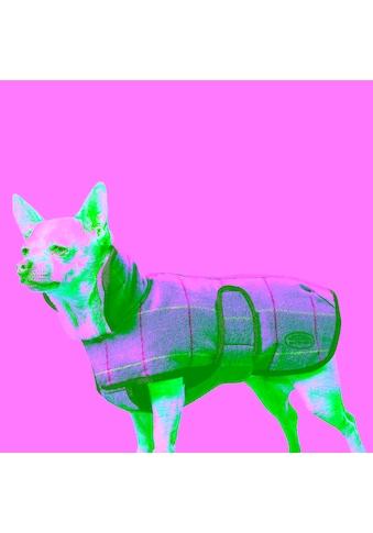 """WeatherBeeta Hundejacke """"Tweed Hundemantel II"""" kaufen"""