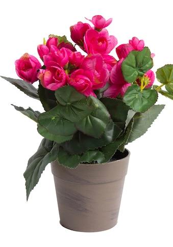 Botanic-Haus Kunstblume »Begonie im Topf« kaufen