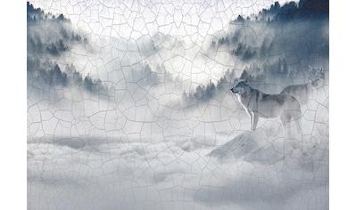 CONSALNET Vliestapete »Wolf im Nebel«, in verschiedenen Größen kaufen